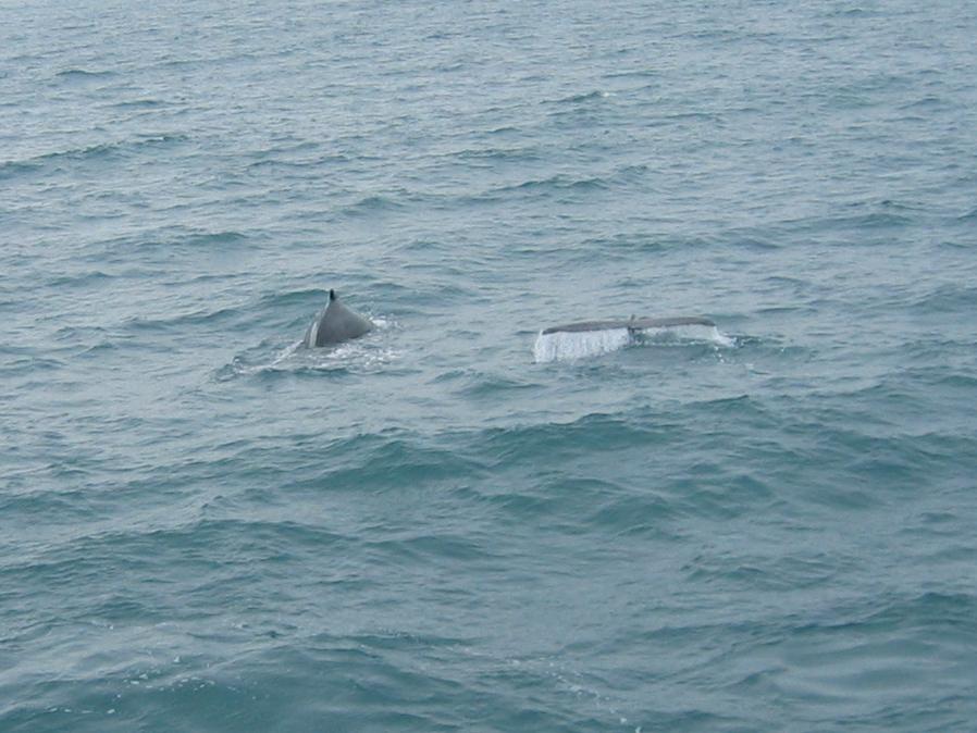 Flipper, le dauphin de tous les combats