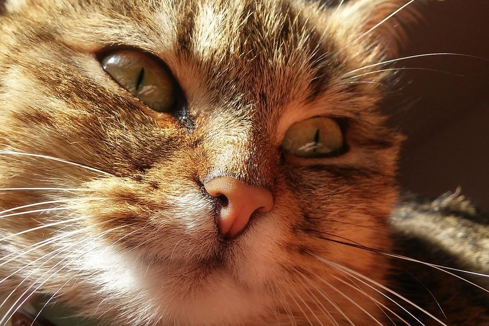 Les chats sont des atouts pour le développement de l'enfant