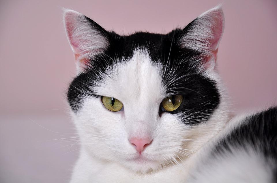 Nos astuces pour que votre chat se sente à l'aise à la maison