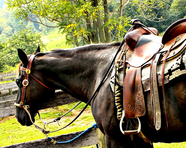 La tondeuse pour chevaux : tout ce que vous devez savoir avant de tondre votre cheval