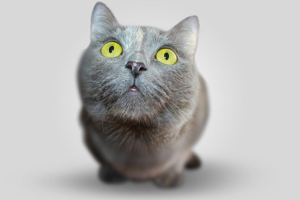 Le chat, un nouveau membre de votre famille