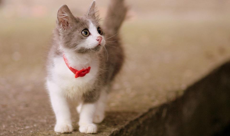 Cohabitation enfant et chat, l'essentiel à savoir pour réussir