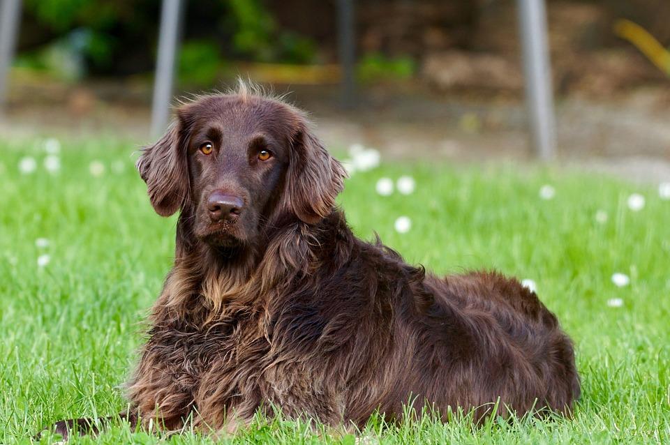 L'essentiel sur les maladies des chiens
