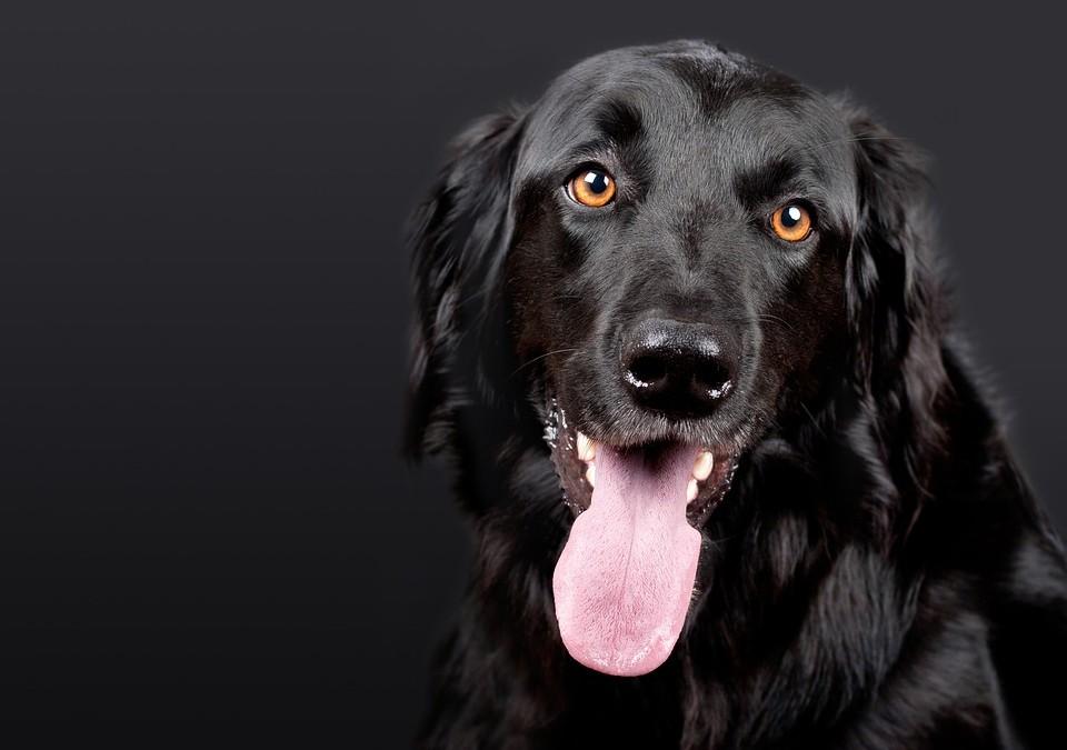 Blues canin: comment aider votre chien?
