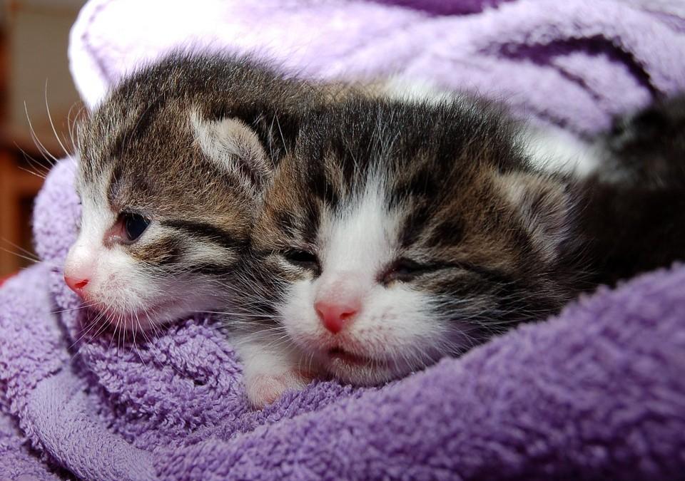 Animaux : devez-vous dormir avec votre chat ?