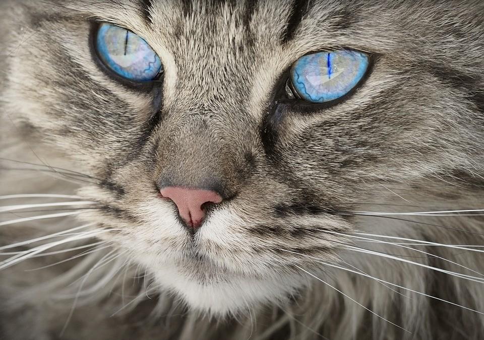 Que faut-il éviter avec votre chat ?