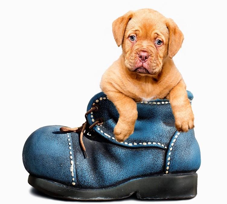 Déprime : comment aider votre chien ?