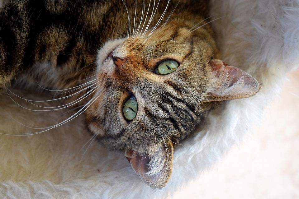 3 étapes à suivre pour que votre chat vous aime