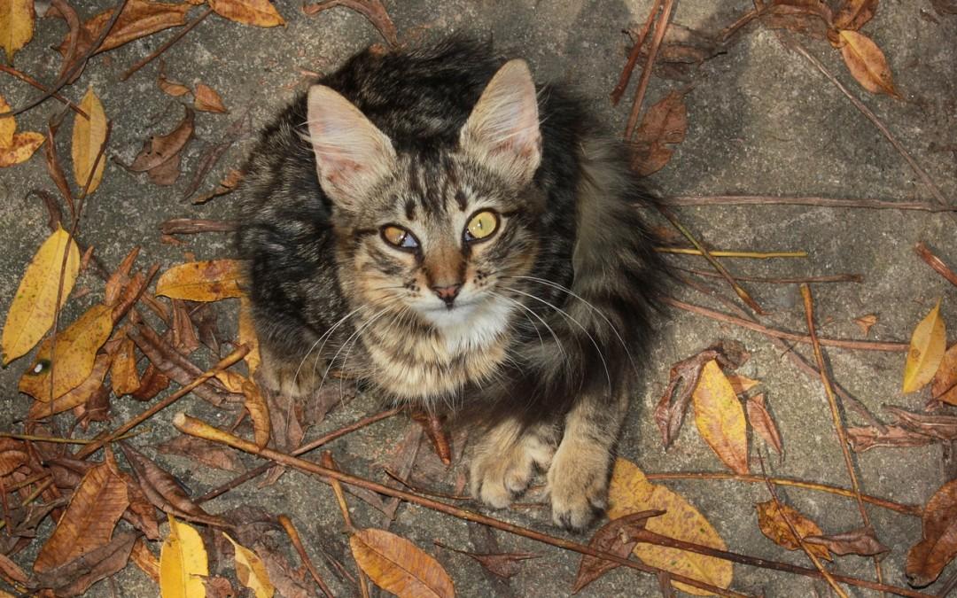 Connaitre les maladies de chat