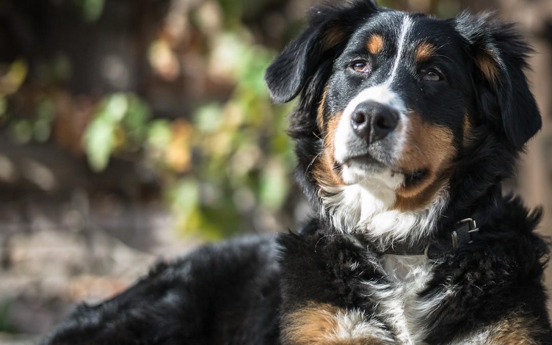 Pension pour chien : le guide