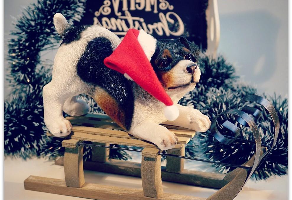 Noël approche, faites plaisir à votre chien !