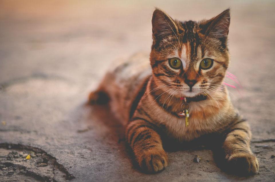 L'alimentation bio pour chats