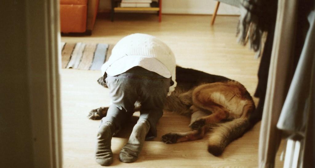 Conseils judicieux avant d'adopter un animal