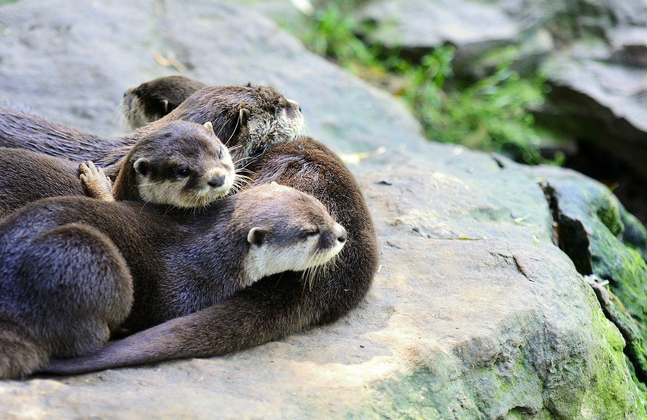 loutre animal protege
