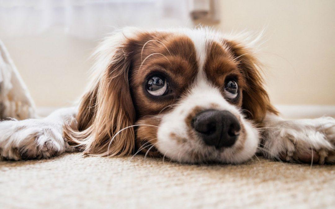 Comment nettoyer le couchage du chien ?